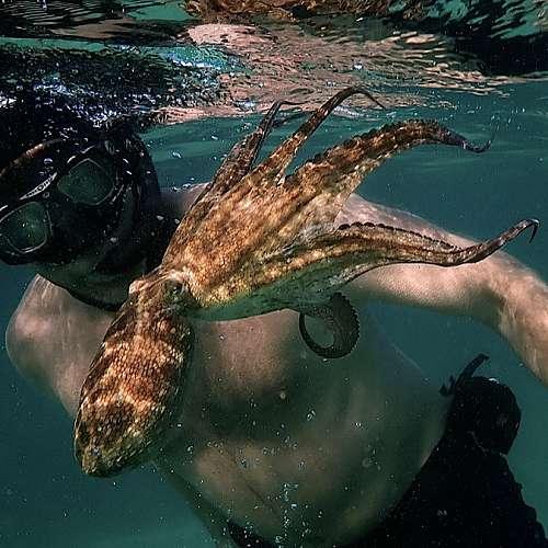 """Любовна история между човек и октопод ще е сред кандидатите за  """"Оскари"""""""