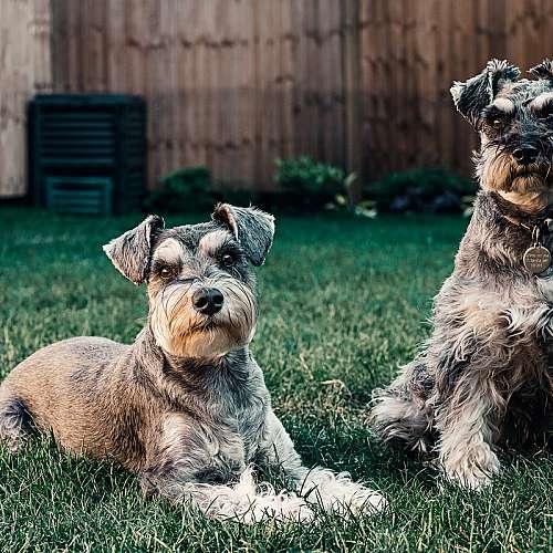 Kои са най-агресивните кучета?