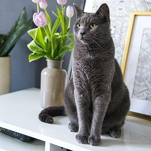 Котките се плашат от дрехи с миризмата на собствениците им
