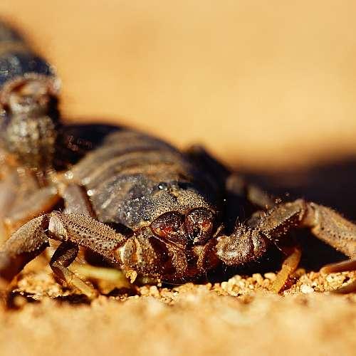 Учени изследват потенциала на отровата от скорпион за лечение на Ковид-19