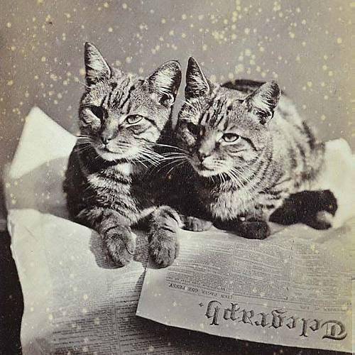 Първата снимка на котка