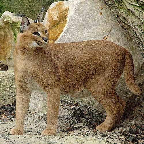 Вижте новите обитатели на зоопарка в Бургас
