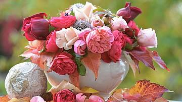 24 ноември: Почитаме Св. Екатерина, кой празнува имен ден