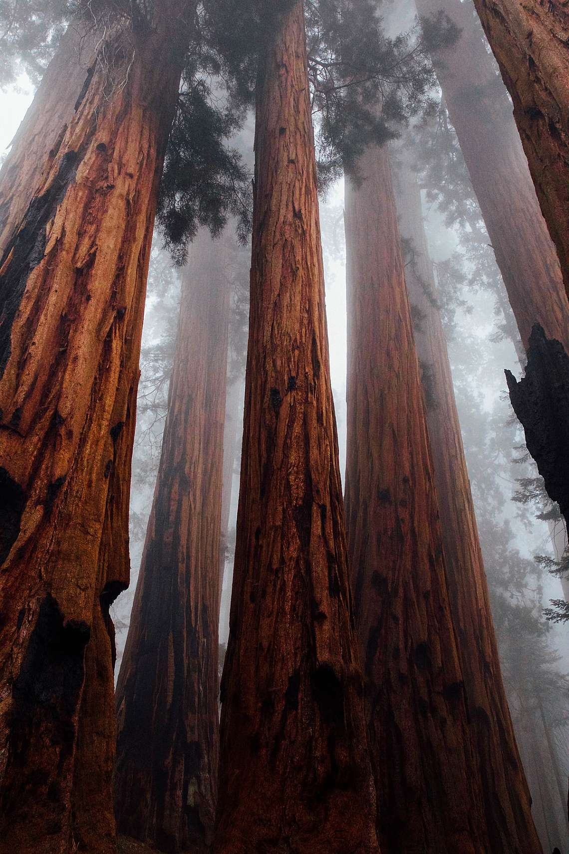 Glory and wonder here on little old earth. This shot is from a particularly magical hike through the Sequoia National Forest.  We were so up high in t...