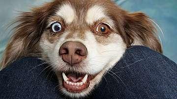 Учени доказаха, че животните също могат да се смеят