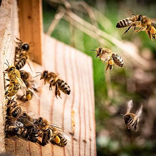 Роботизиран кошер за пчели направиха в Израел