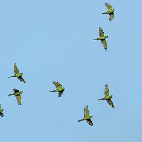 Европейски дни на птиците ще се проведат на 2 и 3 октомври