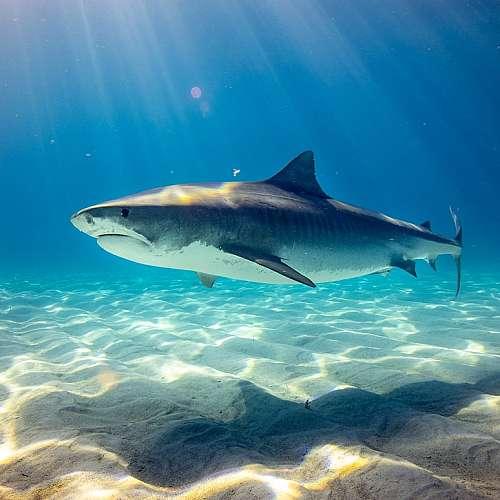 Акулите се ориентират по магнитното поле на Земята
