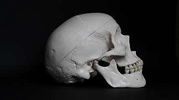 Учени откриха, че черепът осигурява имунитет  на мозъка