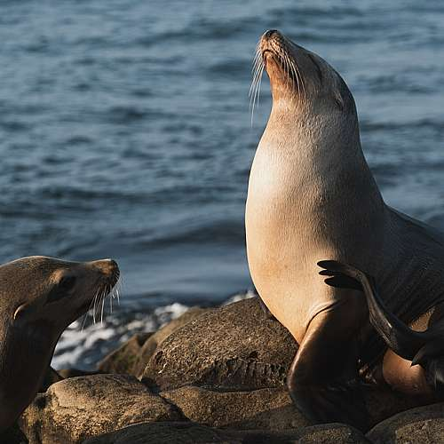 Годишно преброяване на тюлените в Германия