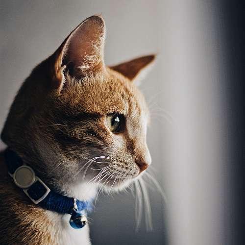 Експертите разкриват какво означават тайните послания на котките