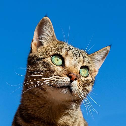 22 февруари ден на котките в Япония