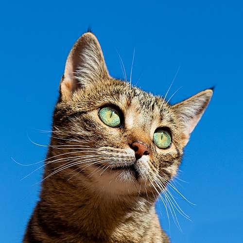 Котка, спасила човек, стана временен началник на полицейско управление