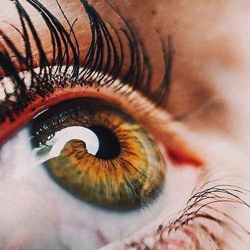 Учени създадоха очен пластир за възстановяване на увредена ретина