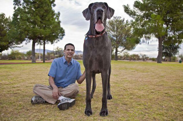 George giant dog