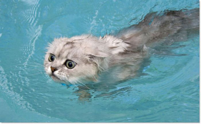 cats in water