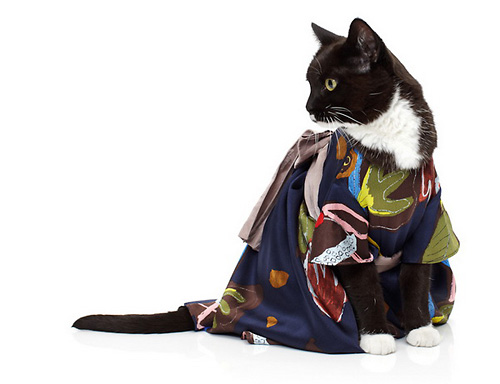 cats wearing with clothes