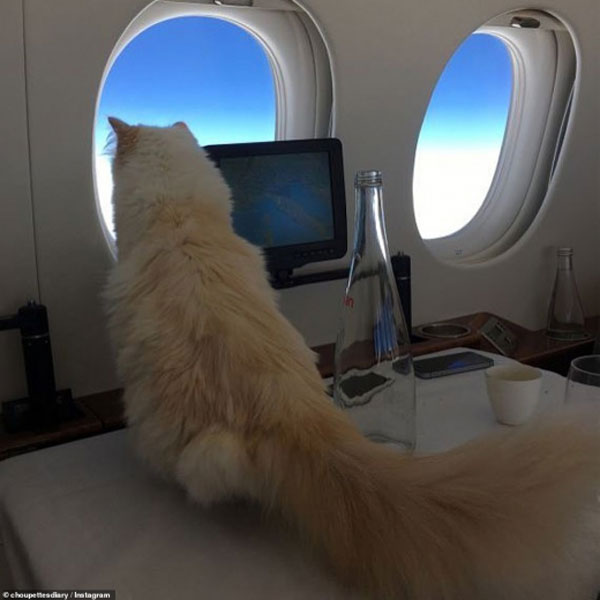 Karl Lagerfeld cat 03
