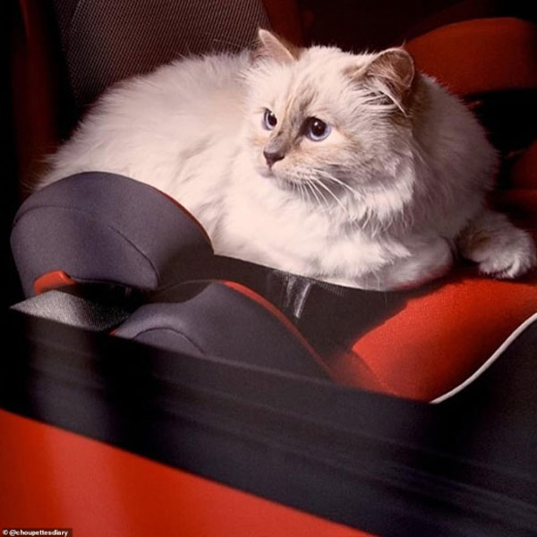 Karl Lagerfeld cat 05
