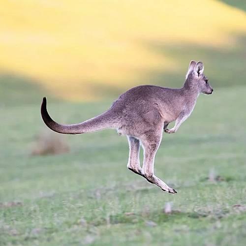 Анджелина Джоли и Брад Пит хранят децата си с месо от кенгуру