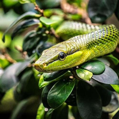 Съвременните змии произлизат от шест различни вида динозаври