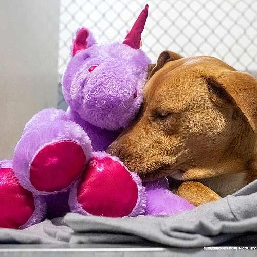 Бездомно куче краде лилав еднорог