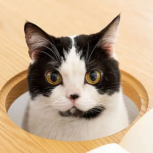 Японска компания пусна трапезна маса с място за котка