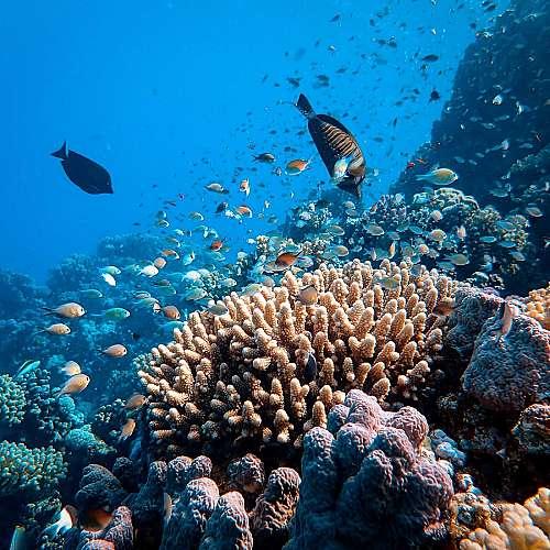 Учени допускат, че Червено море е океан