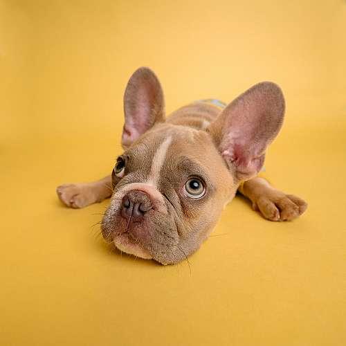 Кучетата са способни да ревнуват стопаните си