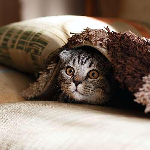 Домашните котки са опасни за дивите животни
