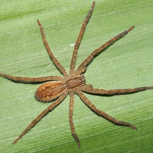 Вижте уникално лепило, вдъхновено от крачетата на паяци