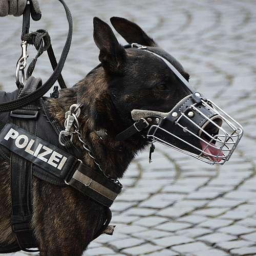 Пенсия за кучета и коне на държавна служба