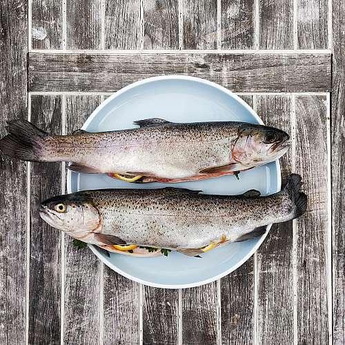 Прясна риба и морски деликатеси ще има на Фестивала на рибата и виното в Бургас