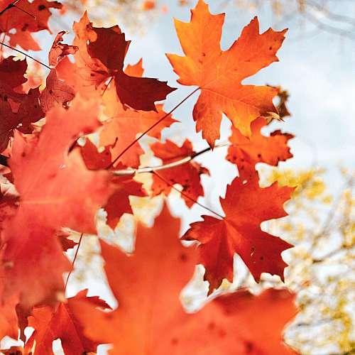 Астрономическата есен настъпва днес у нас в 22 часа и 21 минути