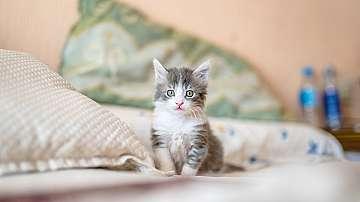 Най-подходящите породи котки за обитаване на апартамент