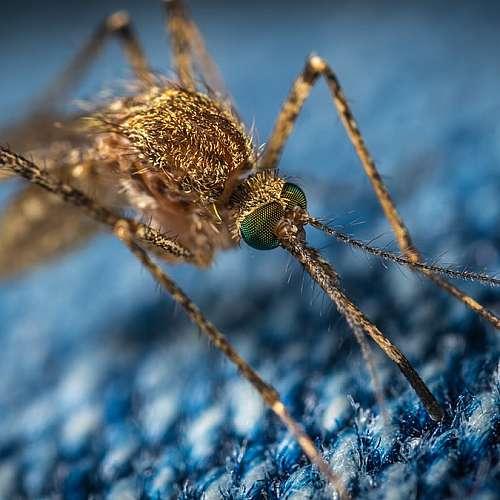 Китай изкорени маларията