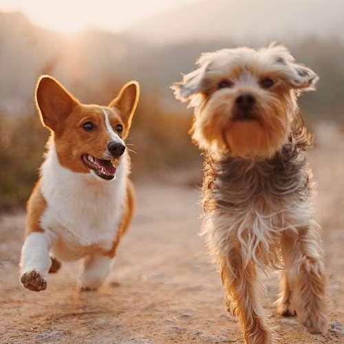 Кучетата също страдат от хиперактивност и липса на концентрация
