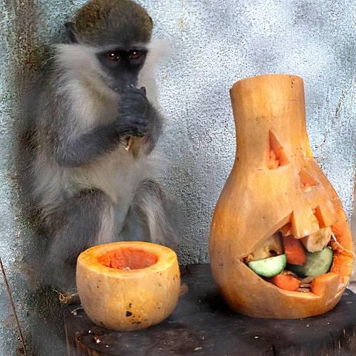 Хелоуин празник във варненския зоопарк
