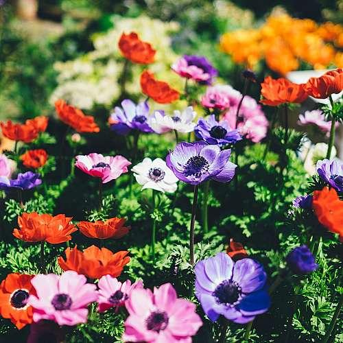 Цветница е един от най-почитаните празници