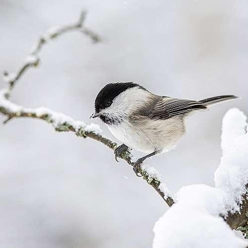 Защо птиците не замръзват през зимата?