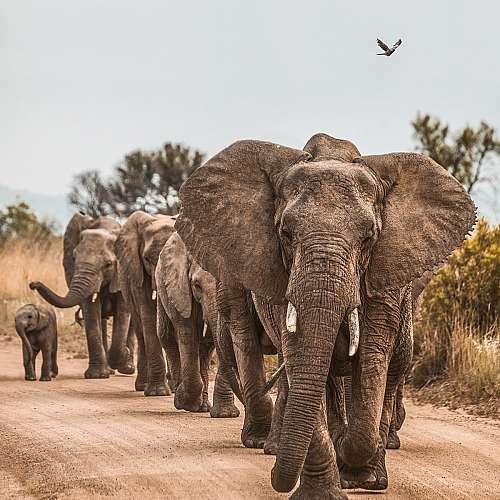 Стадо слонове ще лети от Великобритания за Кения