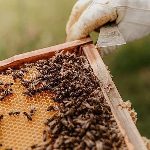 Археолози се натъкнаха на най-древните доказателства за добив на пчелен мед